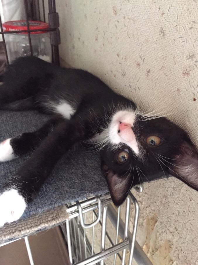 ★黒白仔猫②★