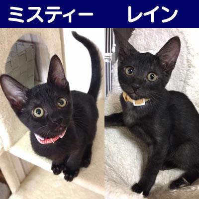 ★★黒猫 姉妹★★