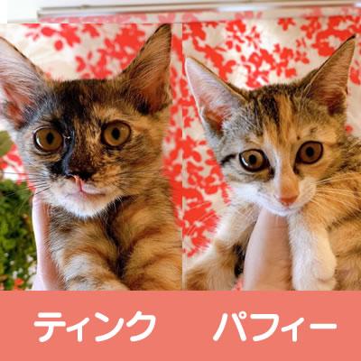 ★★三毛猫 姉妹★★